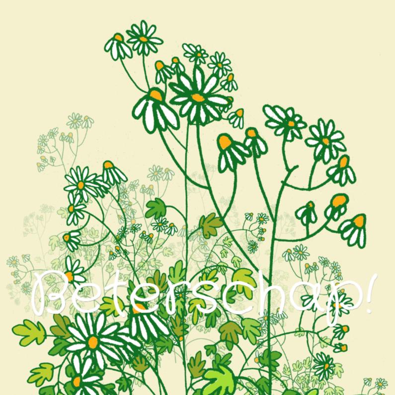 Kamille plant beterschapskaart 1