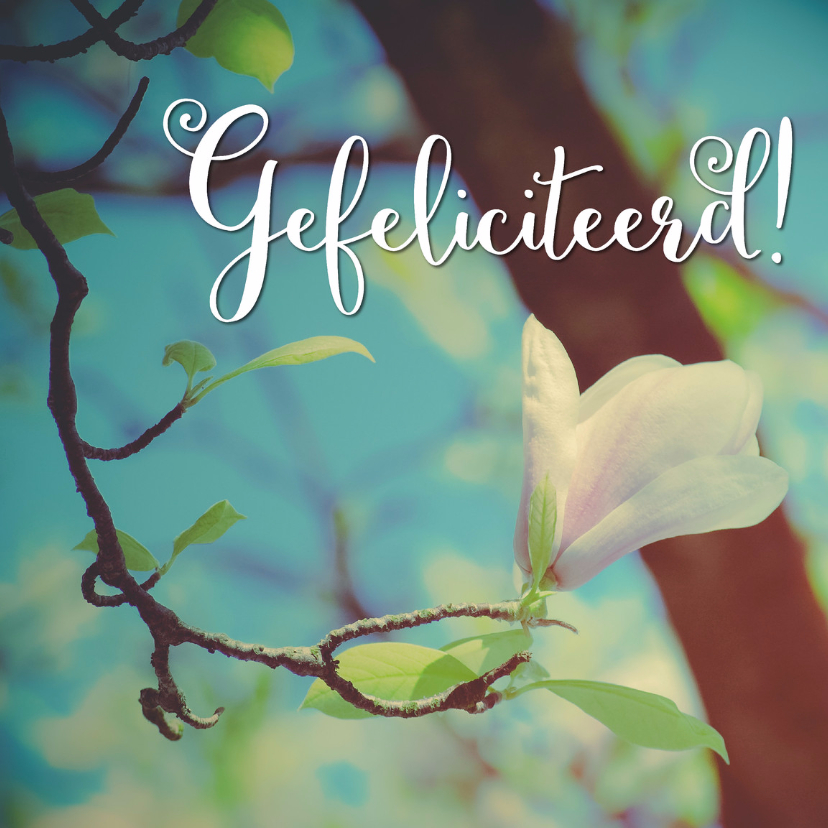 Magnolia - Gefeliciteerd