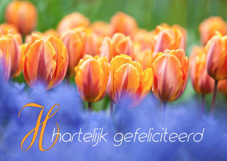 Oranje boven met tulpen 1