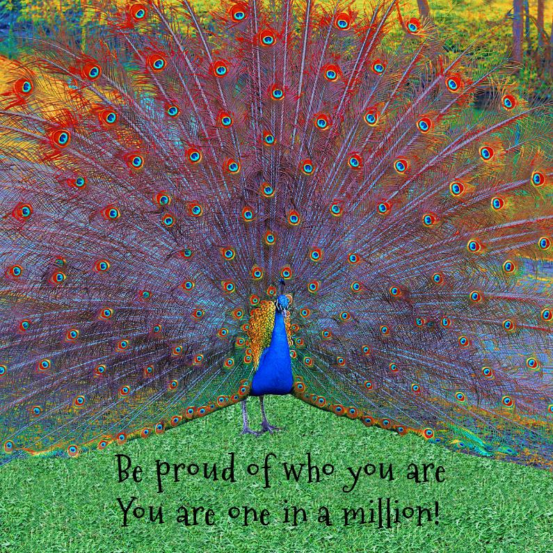 Pauw - wees trots op jezelf