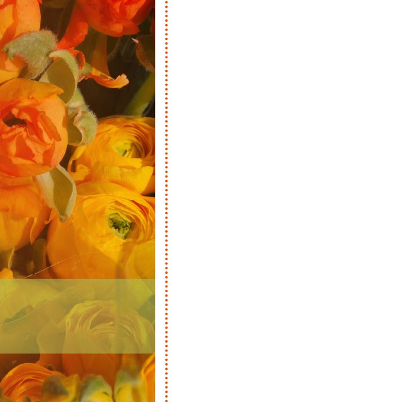 Ranonkel oranje herfstkleur  2