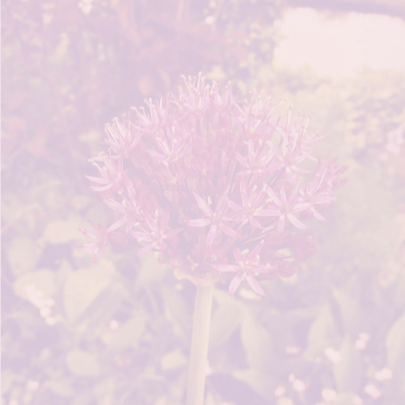 Roze bloem 3