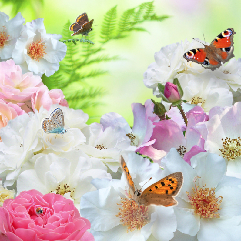 Rozen en vlinders 1