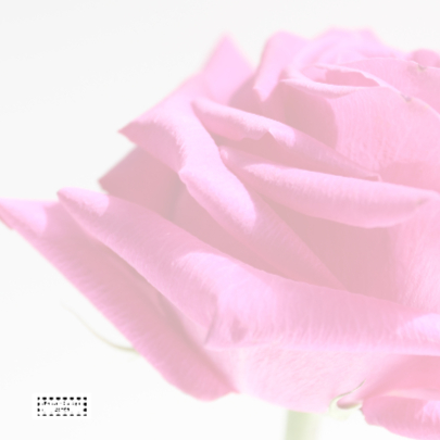 Sara FEEST met Roze roos 2