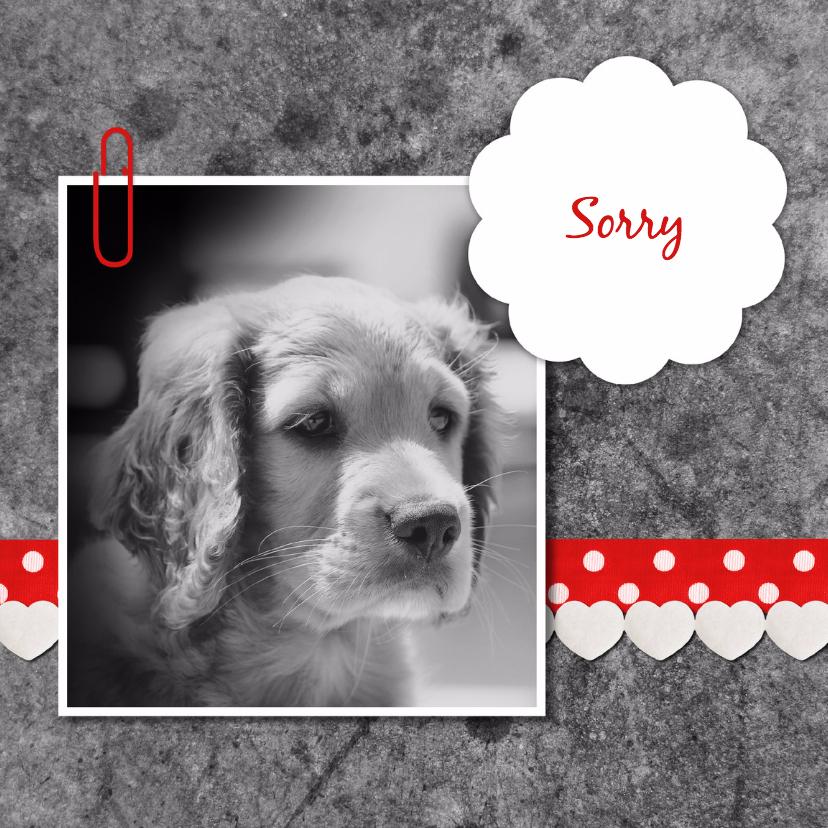 Sorry hond met linten - DH