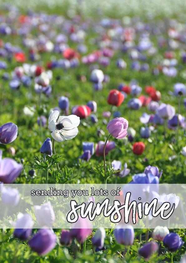 Sterkte kaart Sunshine 1