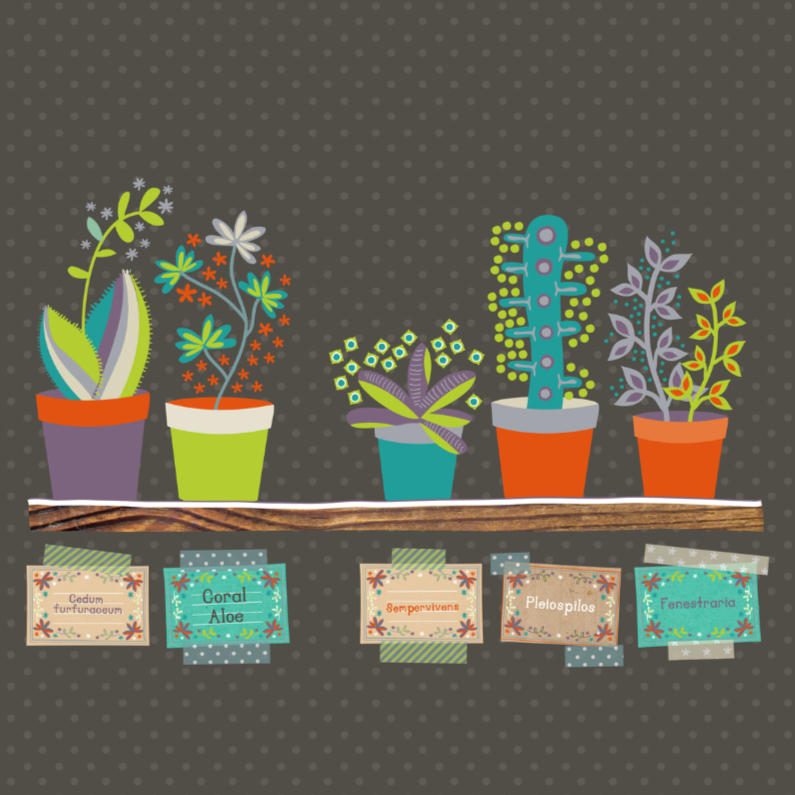 The succulent shop 1