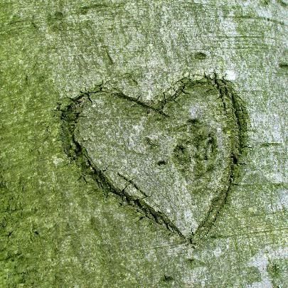 Trouwkaart hart in boom 2