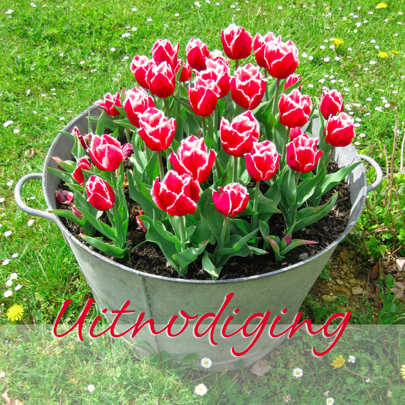 Uitnodigingskaart met rode tulpen 1
