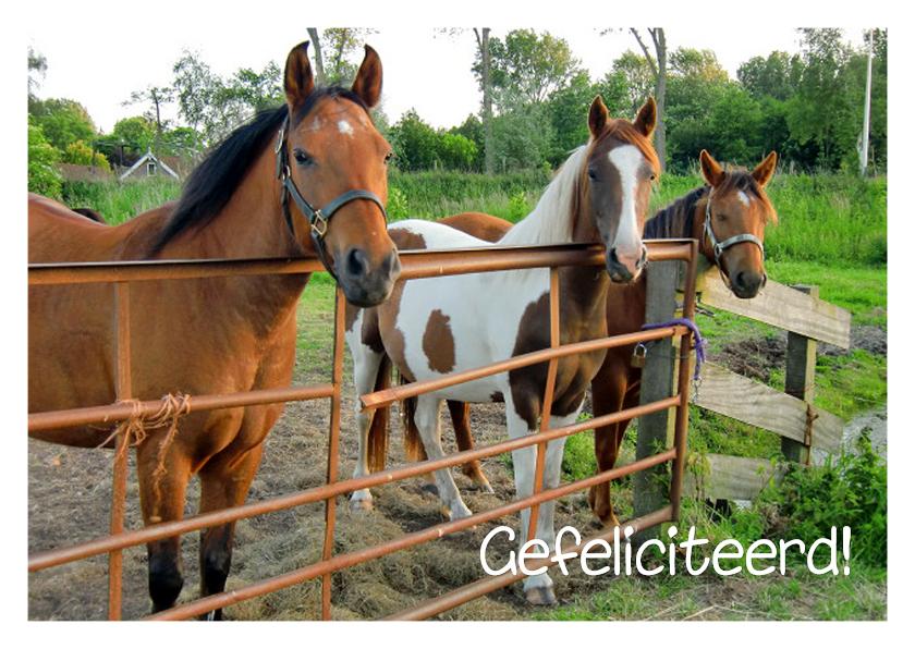 Verjaardag 3 paardjes bij hek 1