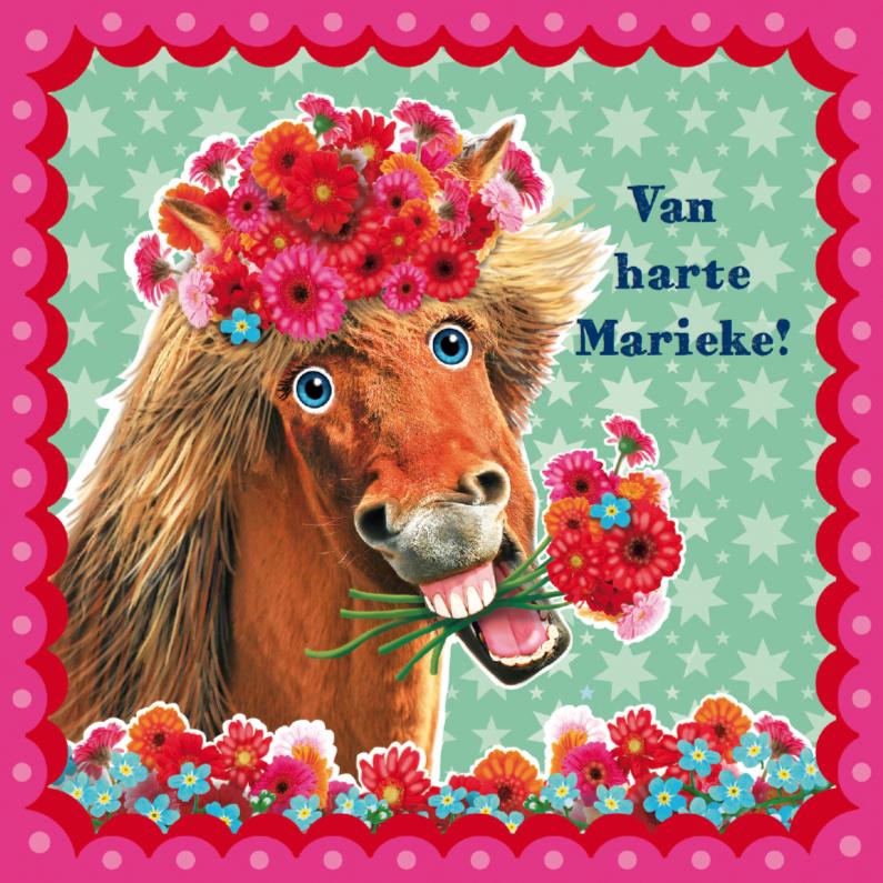 verjaardagskaart hip paard zeegroen roze 1