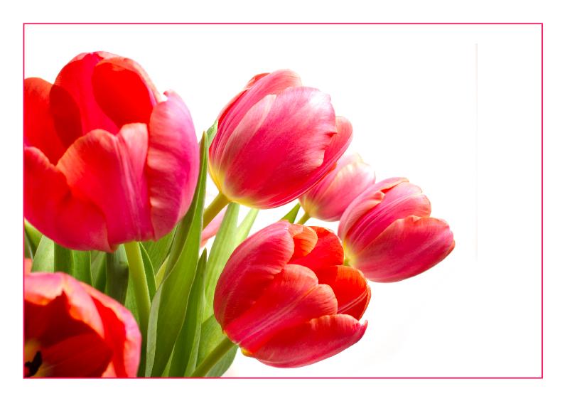 Verjaardagskaart met een bos tulpen 1