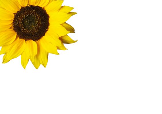 Verjaardagskaart Zonnebloemen 2