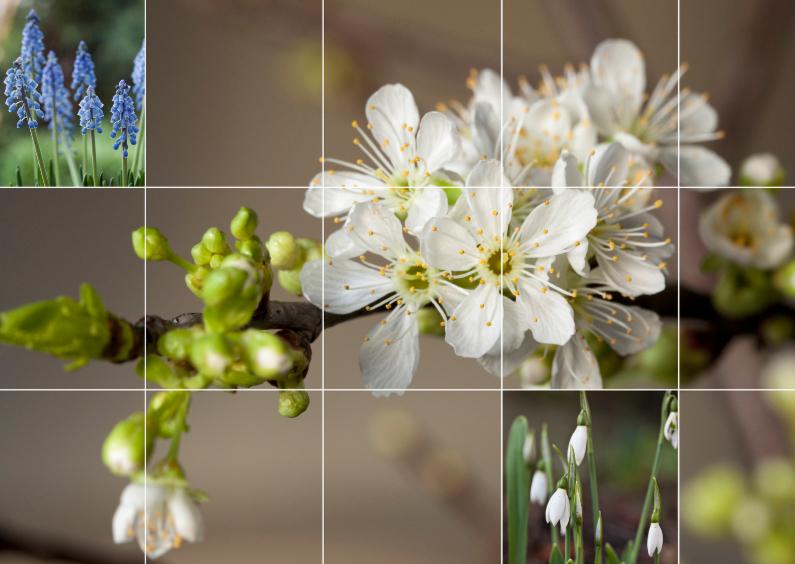 voorjaarskaart 1