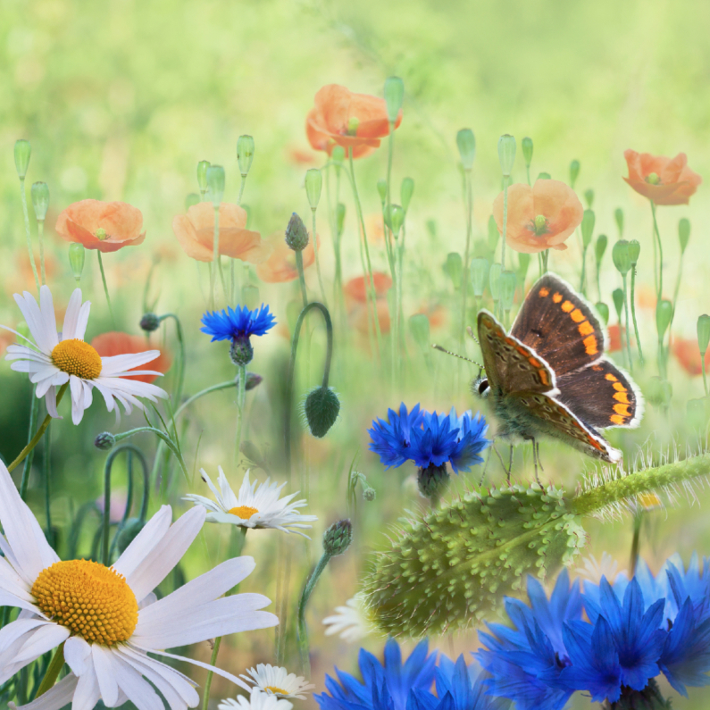 Weidebloemen met vlinder 1