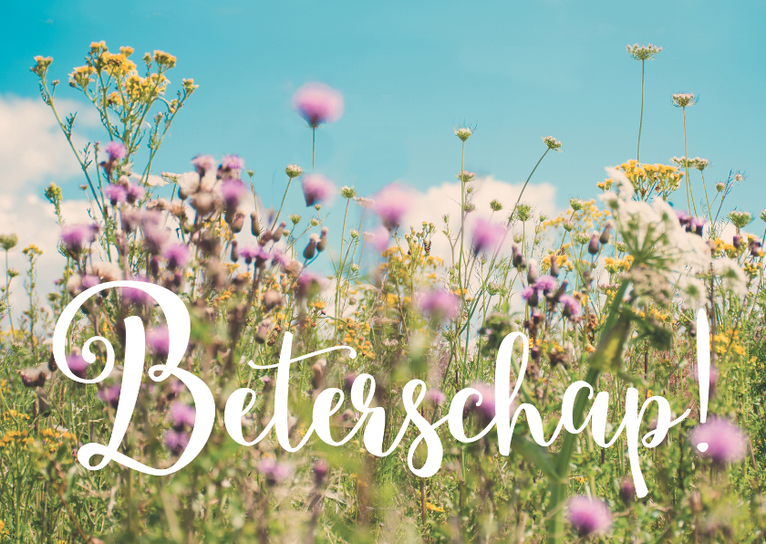 Wildbloemen - Beterschap 1