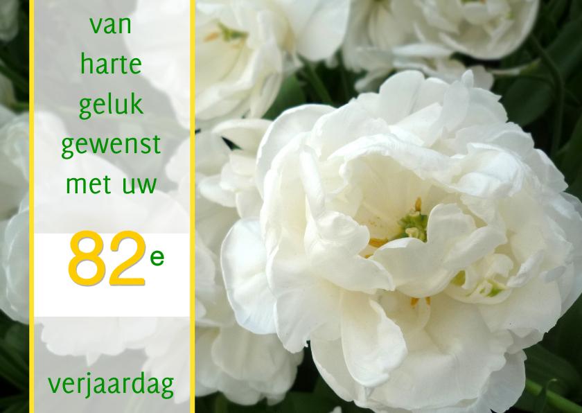 Witte felicitatie Roos-tulpen  1