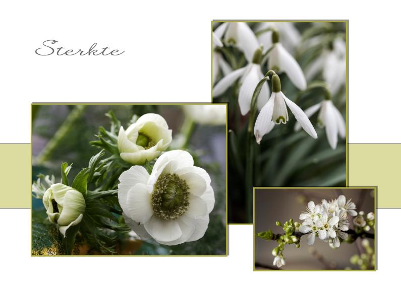 witte voorjaarsbloemen 1