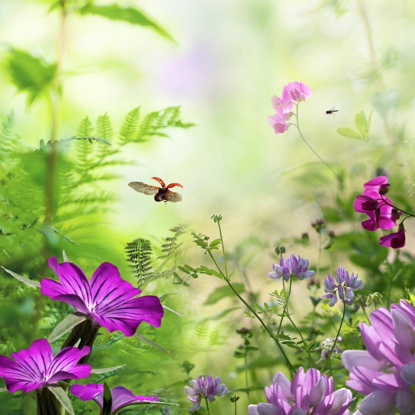 Zomerbloemen met lieveheersbeestje 1