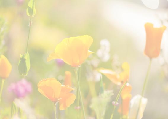 zonnige veldbloemen 3