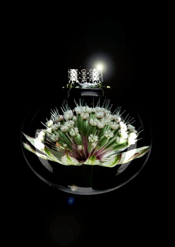 Kerstkaarten - Astrantia bloem in bal
