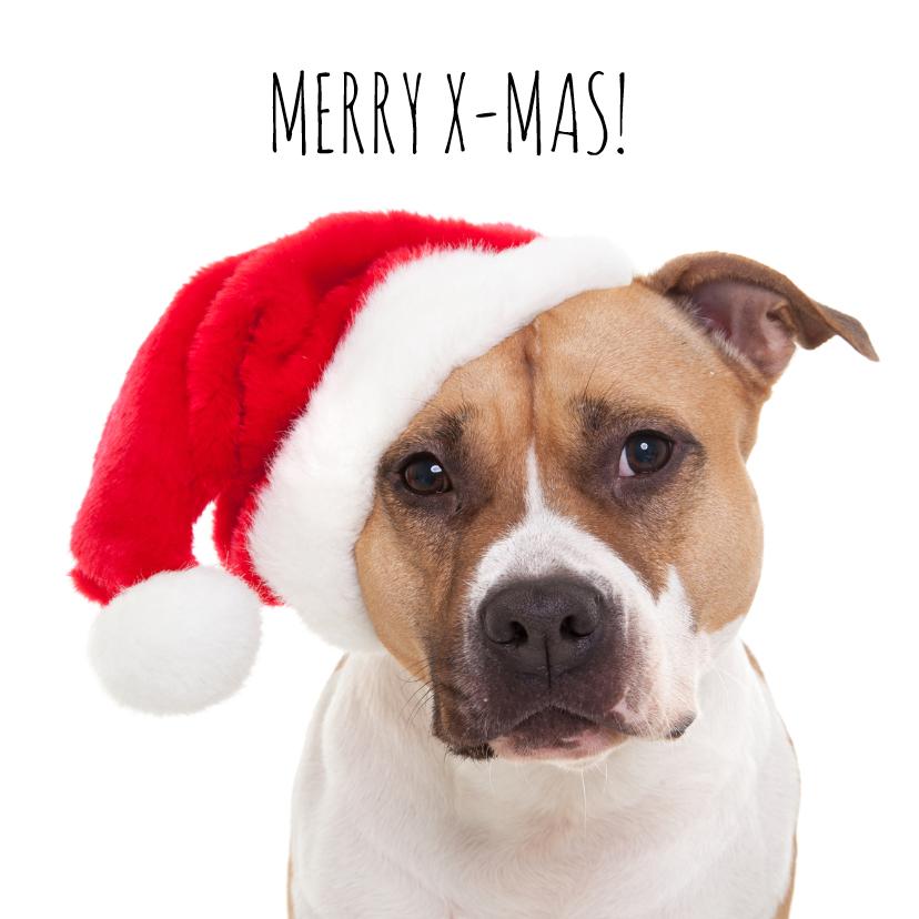 Kerstkaarten - Dieren kerstkaart - Hond - Merry