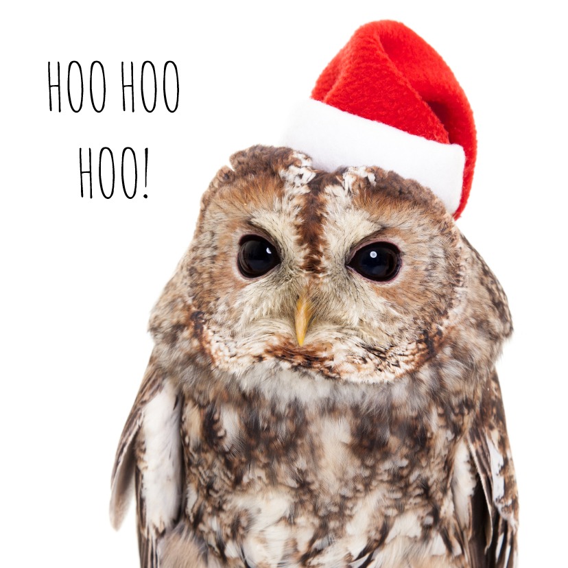 Kerstkaarten - Dieren Kerstkaart - Uil - Owl