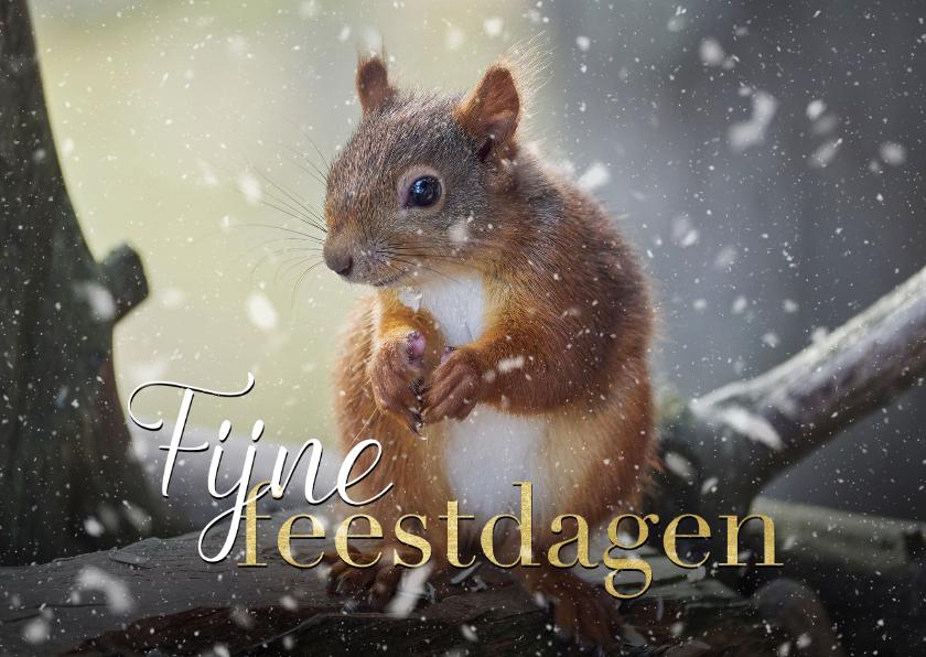 Kerstkaarten - Fotokaart kerst eekhoorntje met sneeuw
