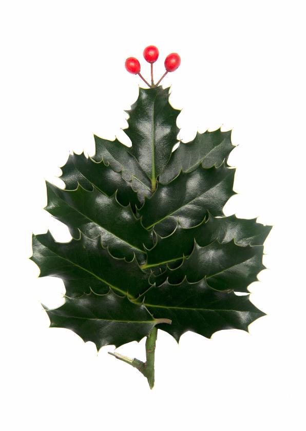 Kerstkaarten - hulstboom met piek