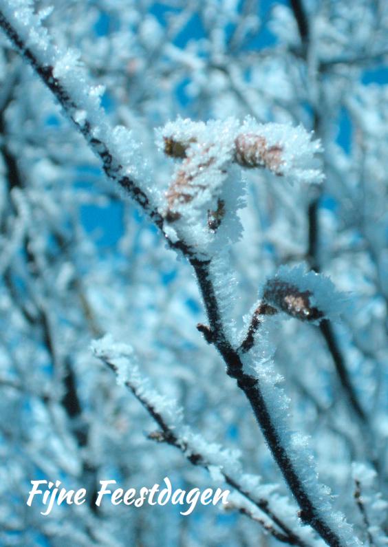Kerstkaarten - Kerstkaarst Rijp op boomtakken