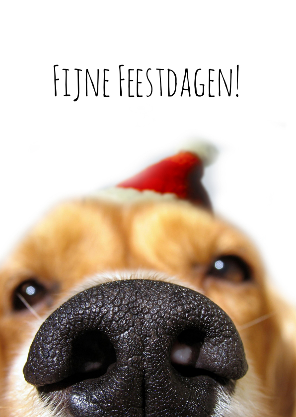 Kerstkaarten - Kerstkaart hondensnuit met muts