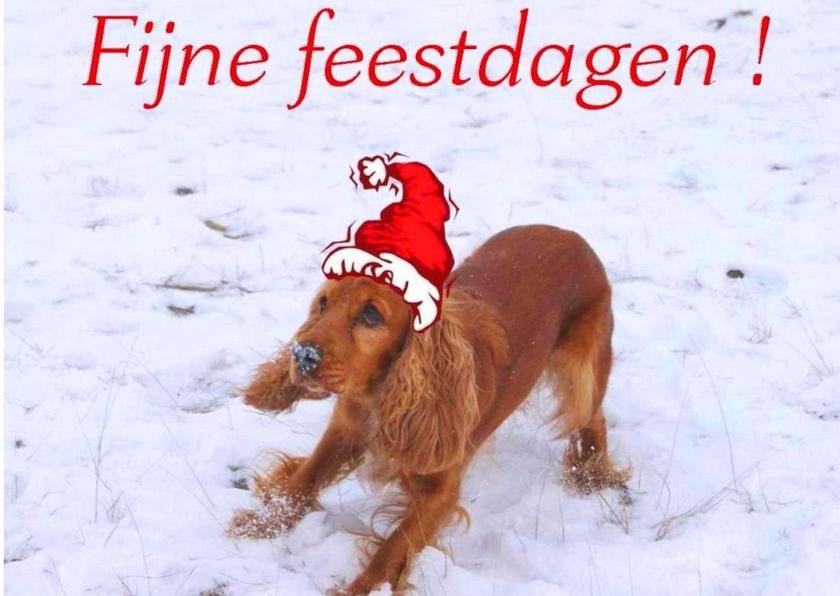 Kerstkaarten - kerstmis hond