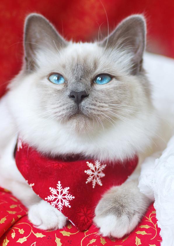 Kerstkaarten - Lieve kerstgroet met schattige kitten