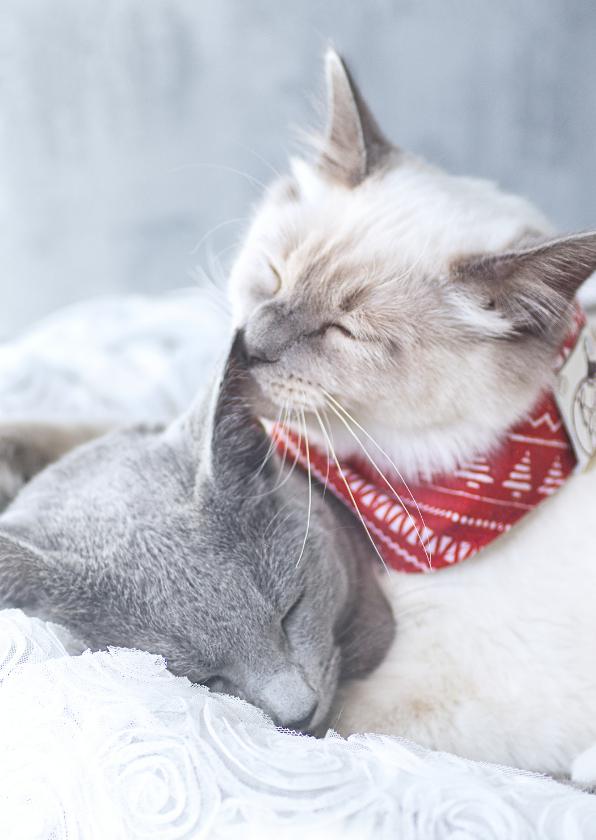 Kerstkaarten - Lieve kerstkaart van twee knuffelende katjes