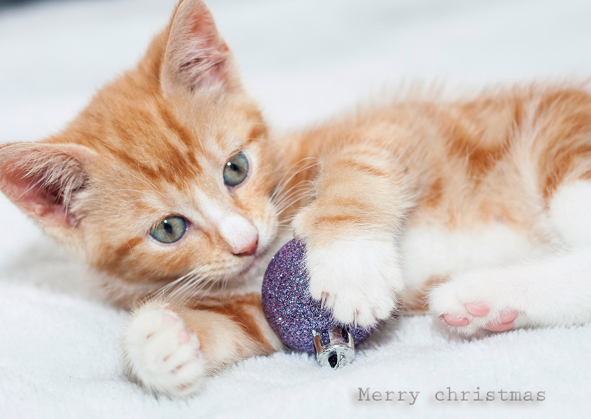 Kerstkaarten - merry Christmas kitten