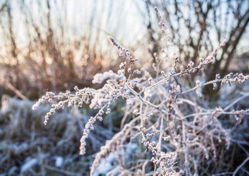Kerstkaarten - Merry merry white