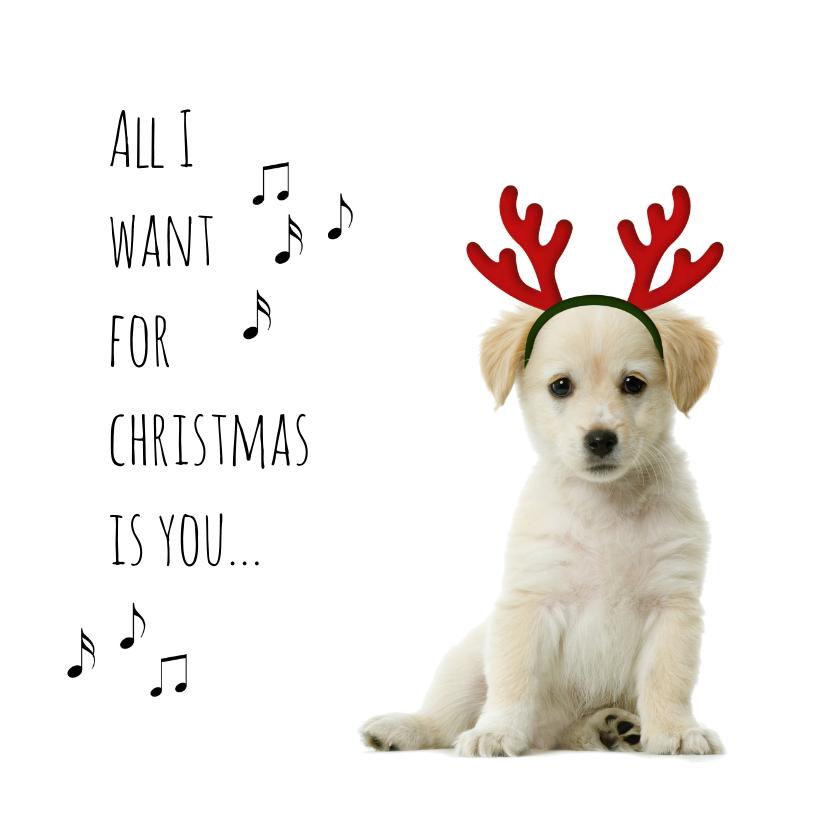 Kerstkaarten - Puppie met gewei-isf