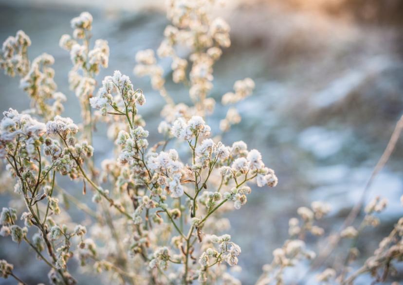 Kerstkaarten - snowy flowers