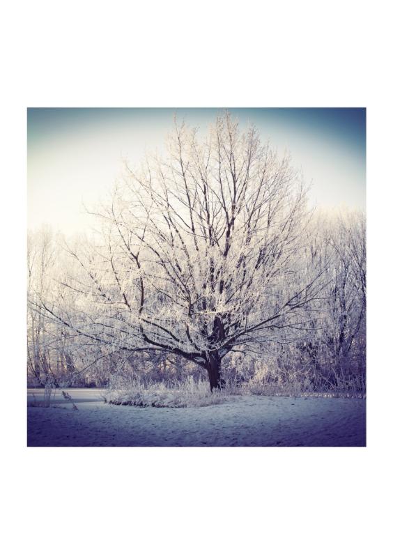 Kerstkaarten - The  white beauty