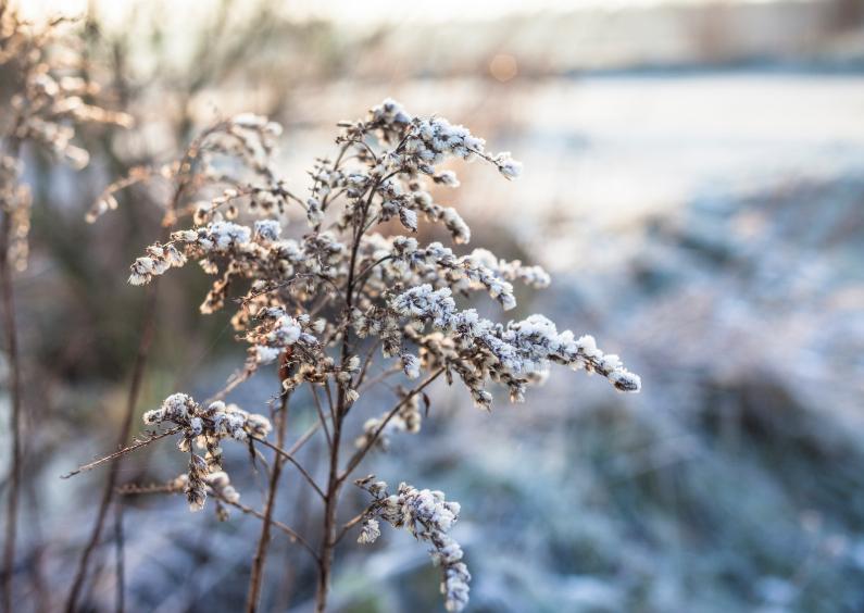 Kerstkaarten - welcome to winter wonderland