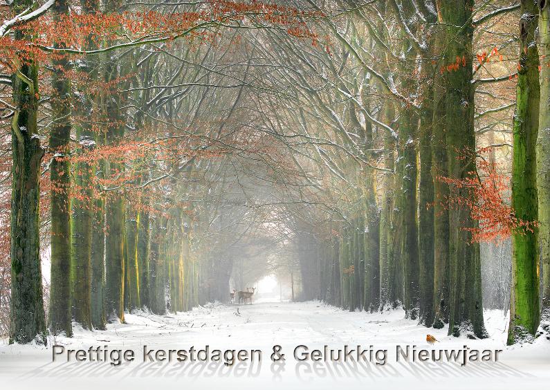 Kerstkaarten - Winters besneeuwd bos