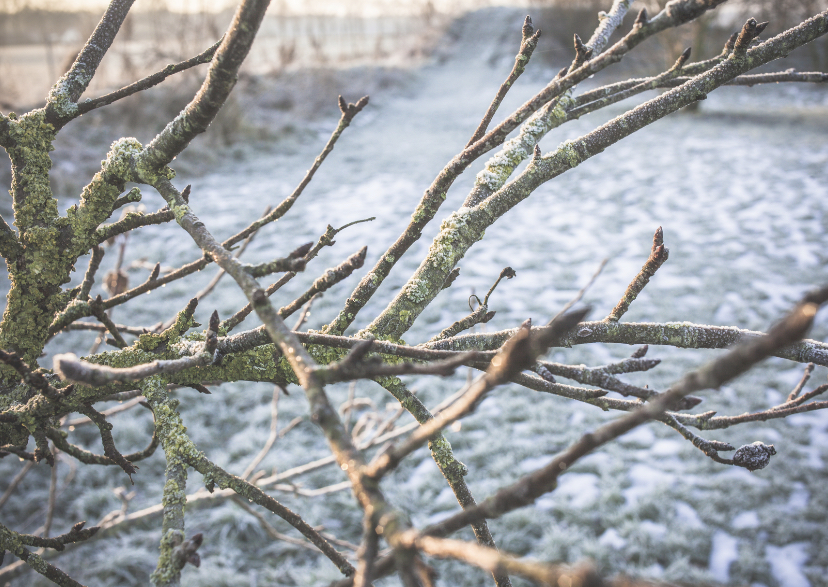 wintery  branches  1