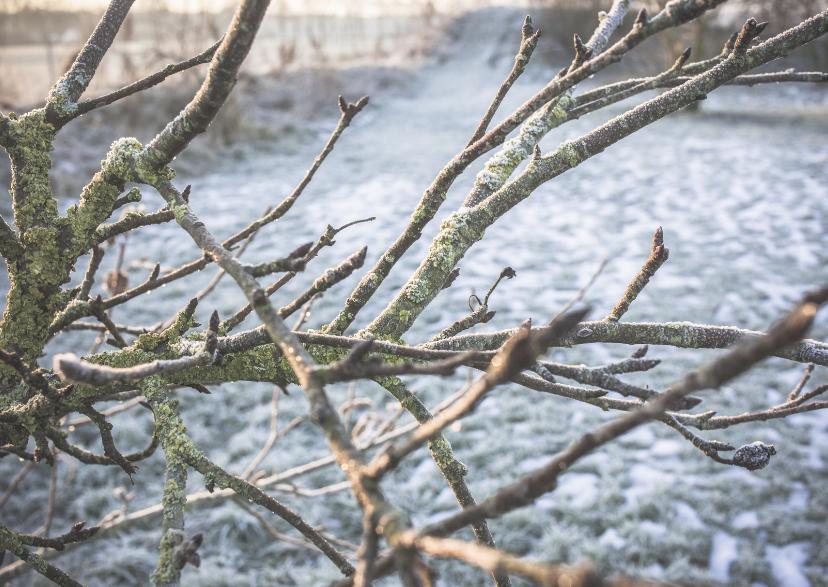 Kerstkaarten - wintery  branches