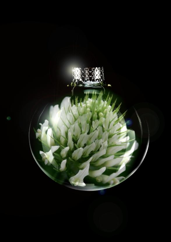Kerstkaarten - witte bloem in bal