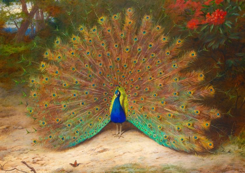 Kunstkaarten - Kunstkaart van Archibald Thornburn. Pauw