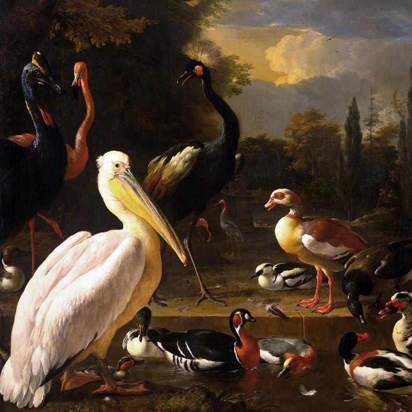 Kunstkaarten - Kunstkaart van Melcior d'Hondecoeter. Het drijvend veertje