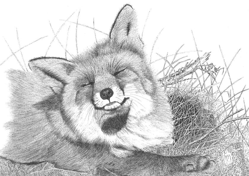 Kunstkaarten - Sluimerend vosje