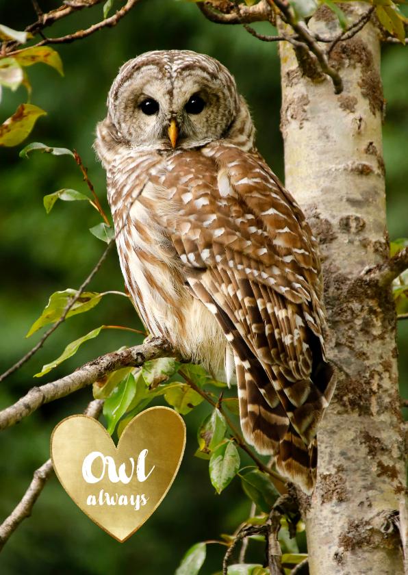 Liefde kaarten - Liefde kaart uil Owl always love you - gouden hart