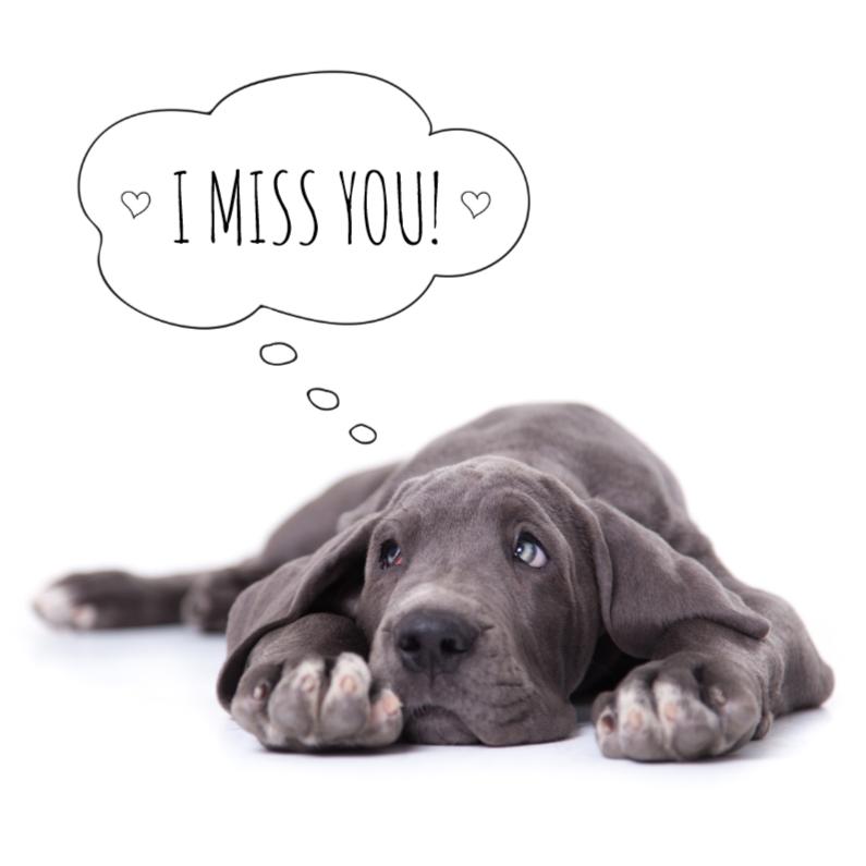 Liefde Mis Je Duitse Dog Puppy