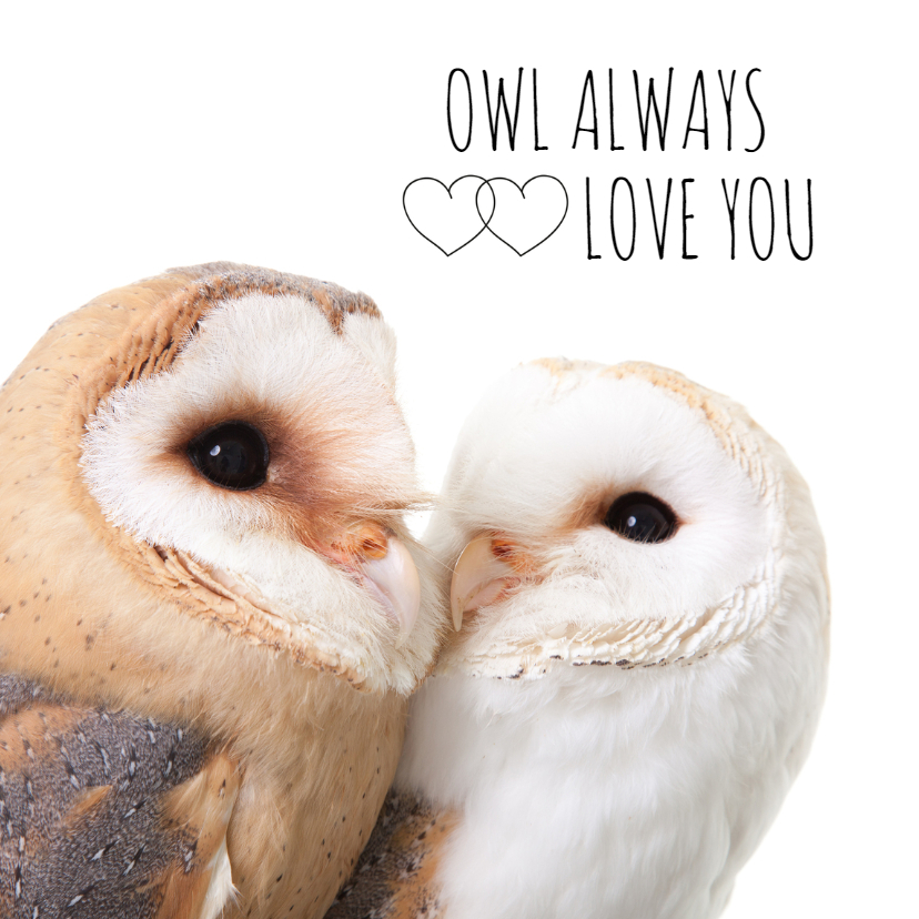 Liefde kaarten - Liefde - Owl always love you uiltjes